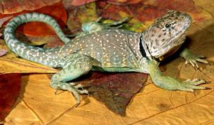 Рептилии произошли от млекопитающих